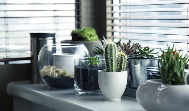 polička s kaktusmi.jpg